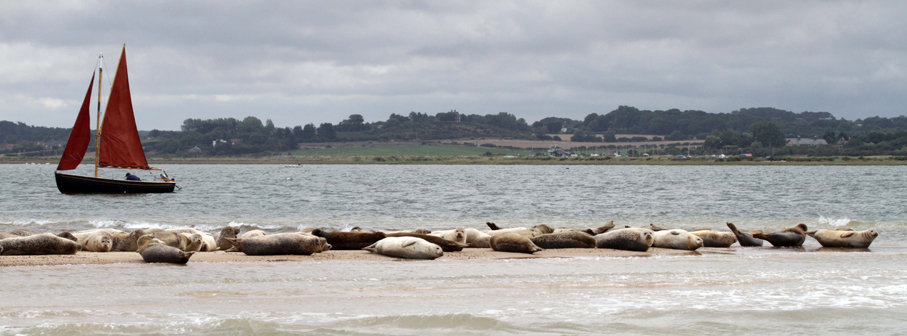Sailing with seals at Blakeney Point
